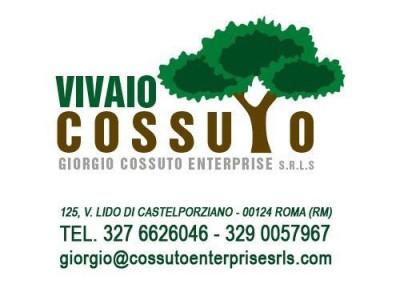 vivaio-cossuto